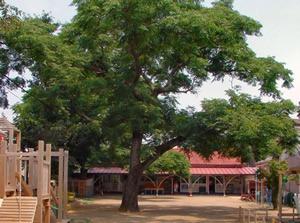 明星幼稚園